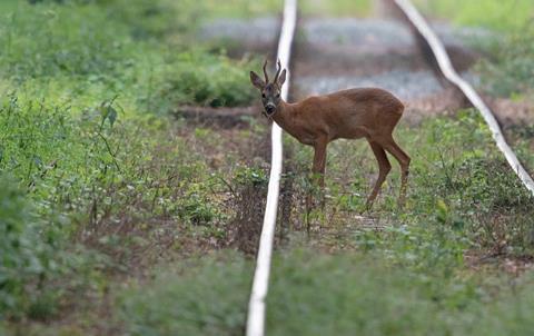 de-deer-track-vdv